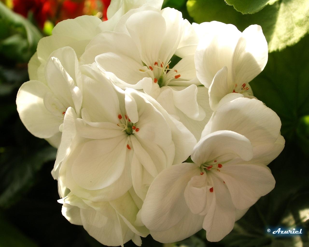 7569 скачать обои Растения, Цветы - заставки и картинки бесплатно