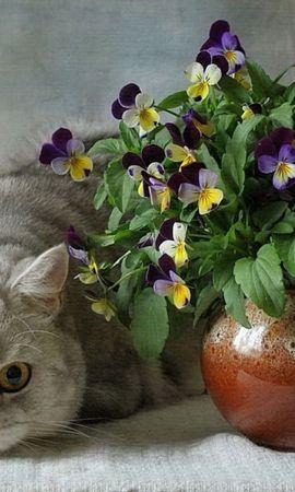 57193 baixar papel de parede Animais, Gatos, Britânico, Vaso, Ramalhete, Buquê, Cerâmica, Flores - protetores de tela e imagens gratuitamente
