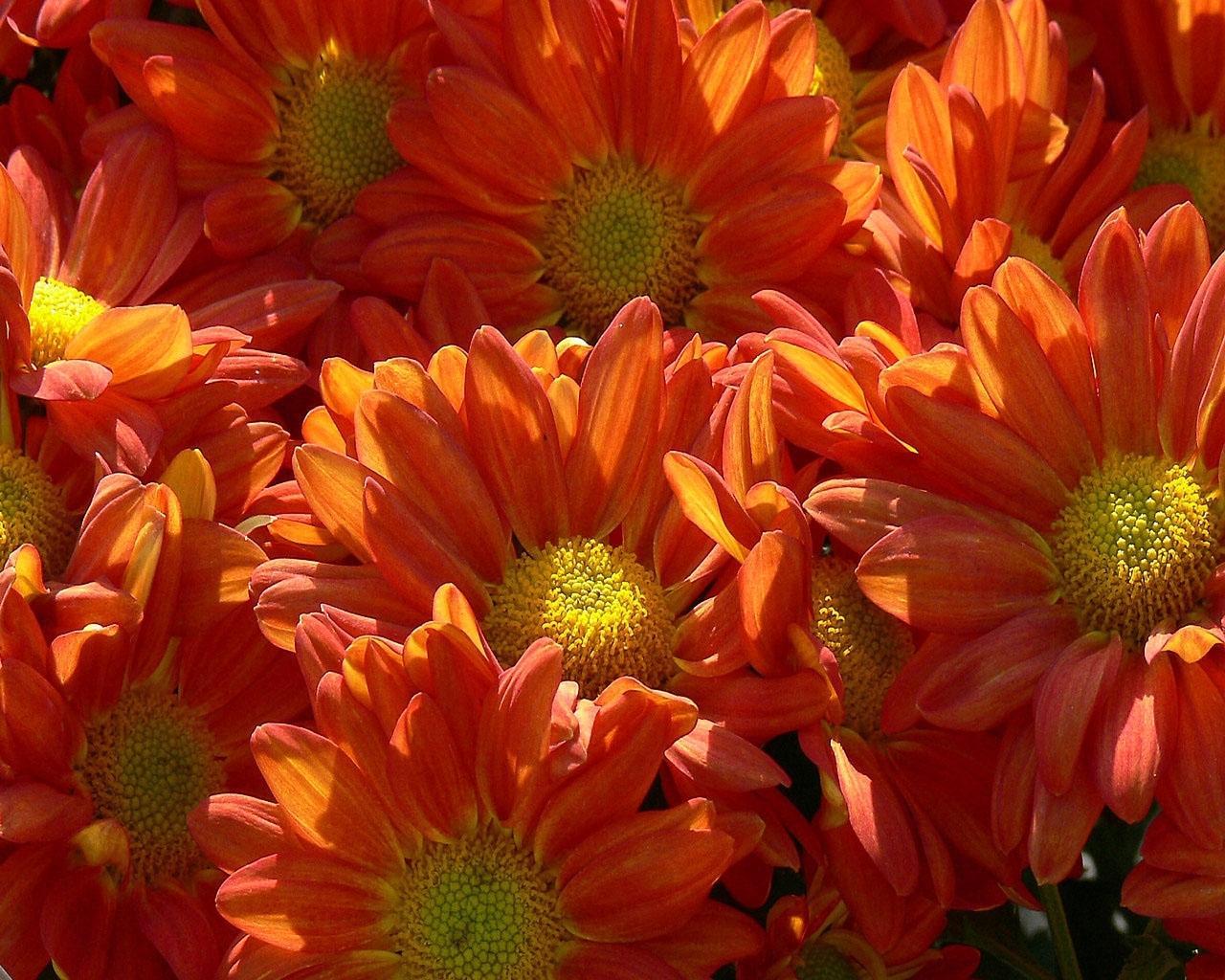 9442 descargar fondo de pantalla Plantas, Flores: protectores de pantalla e imágenes gratis