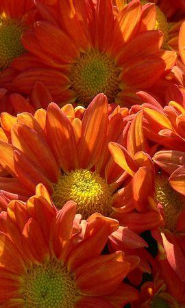 9442 скачать обои Растения, Цветы - заставки и картинки бесплатно