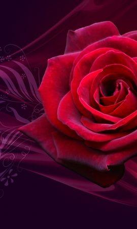 46004 descargar fondo de pantalla Plantas, Flores, Roses: protectores de pantalla e imágenes gratis