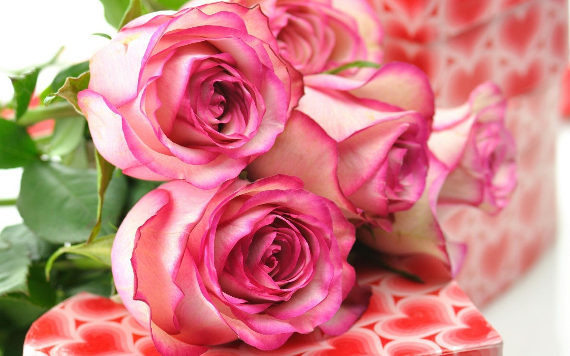 47118 скачать обои Растения, Цветы, Розы - заставки и картинки бесплатно