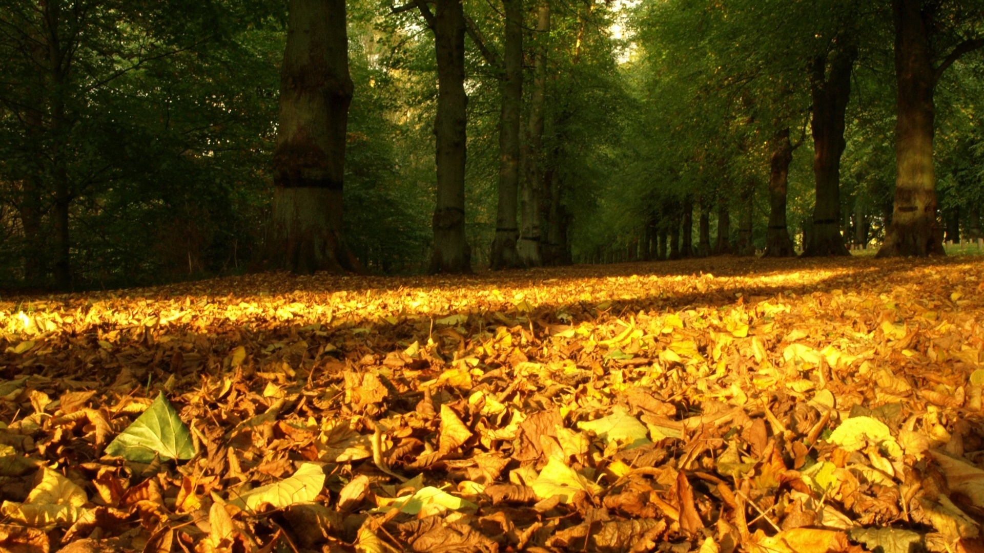 33434 download wallpaper Landscape, Trees, Autumn, Leaves screensavers and pictures for free
