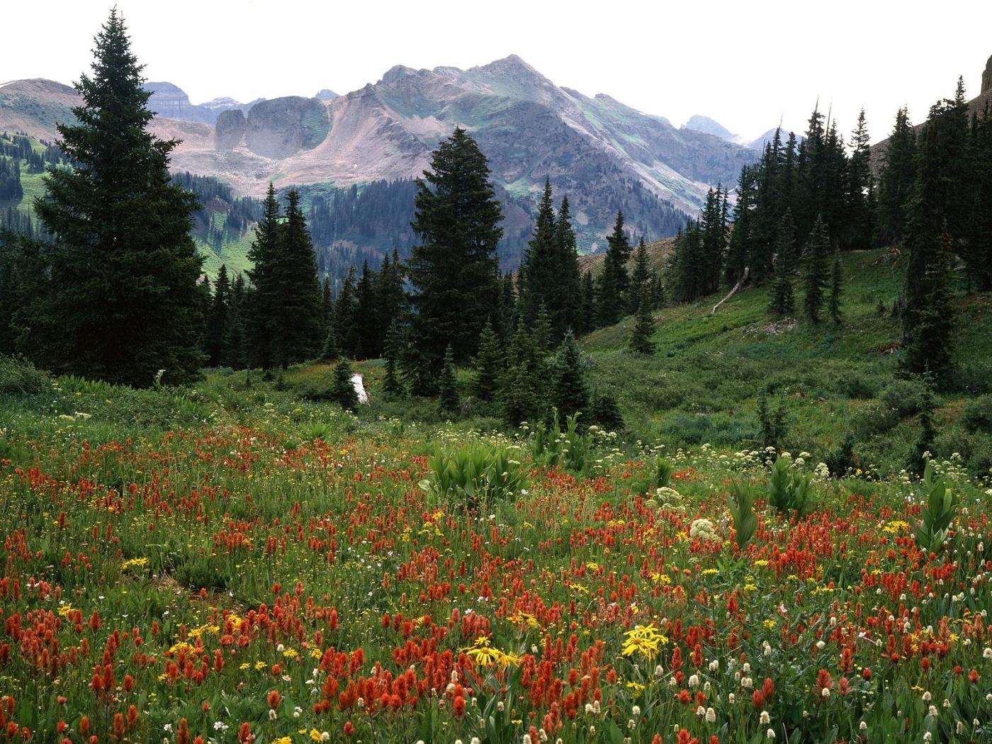 23398 descargar fondo de pantalla Paisaje, Flores, Árboles, Montañas: protectores de pantalla e imágenes gratis