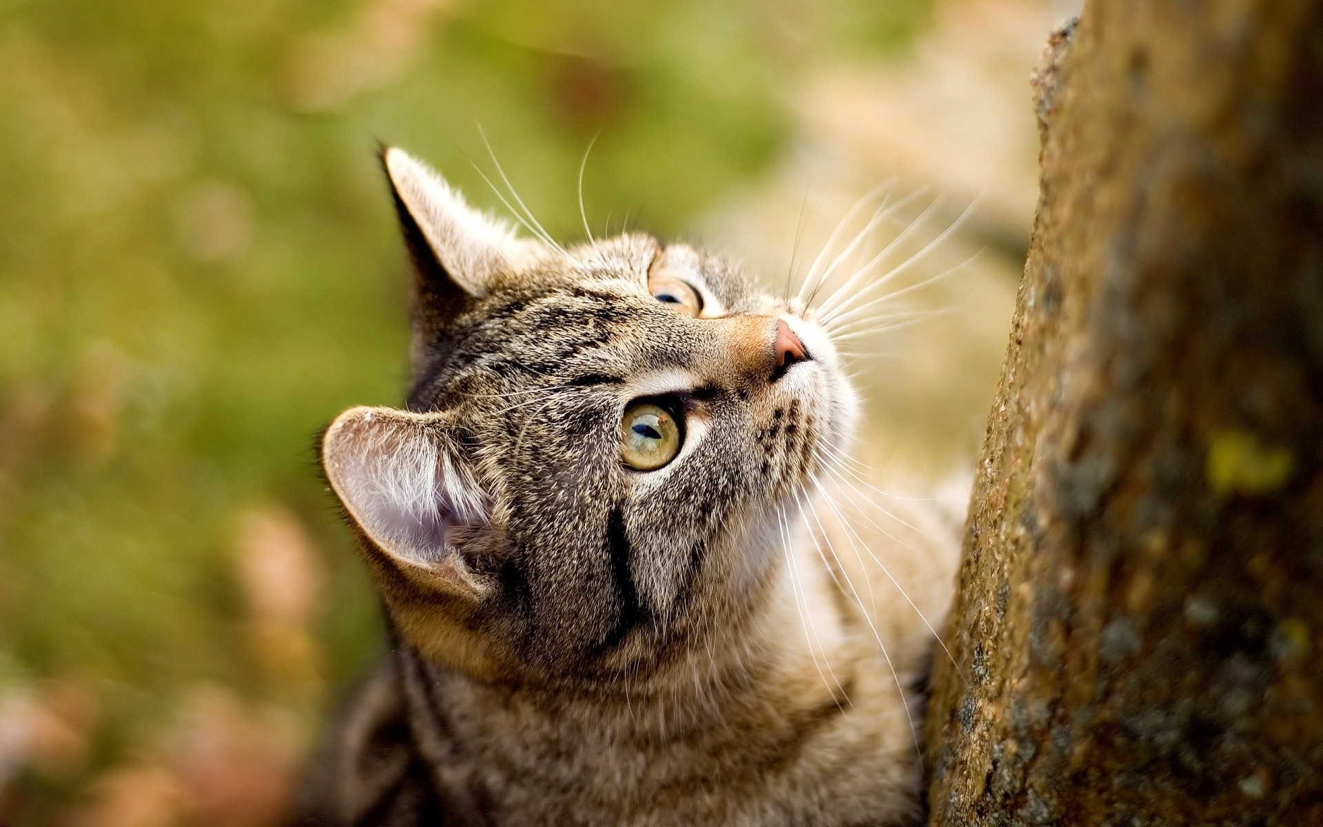49322 download wallpaper Animals, Cats screensavers and pictures for free