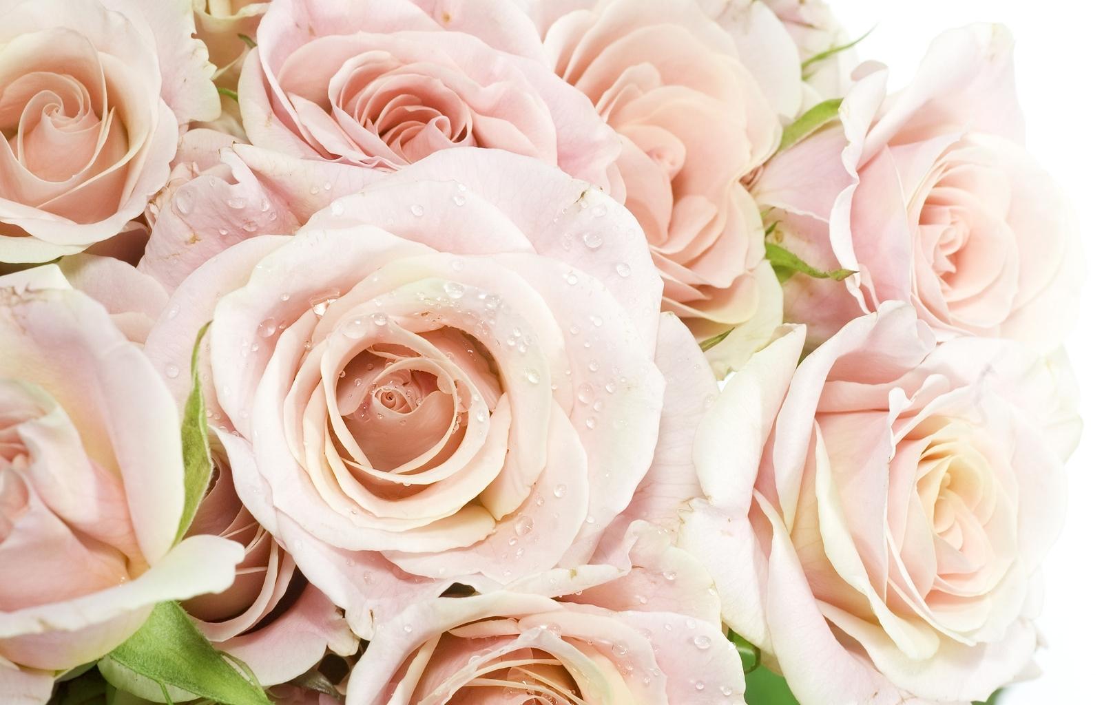40177 Hintergrundbild herunterladen Blumen, Pflanzen - Bildschirmschoner und Bilder kostenlos