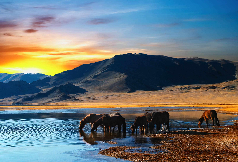 114710 Protetores de tela e papéis de parede Cavalos em seu telefone. Baixe Cavalos, Animais, Pôr Do Sol, Montanhas, Lago, Rebanho, Manada, Rega, Poço De Água fotos gratuitamente