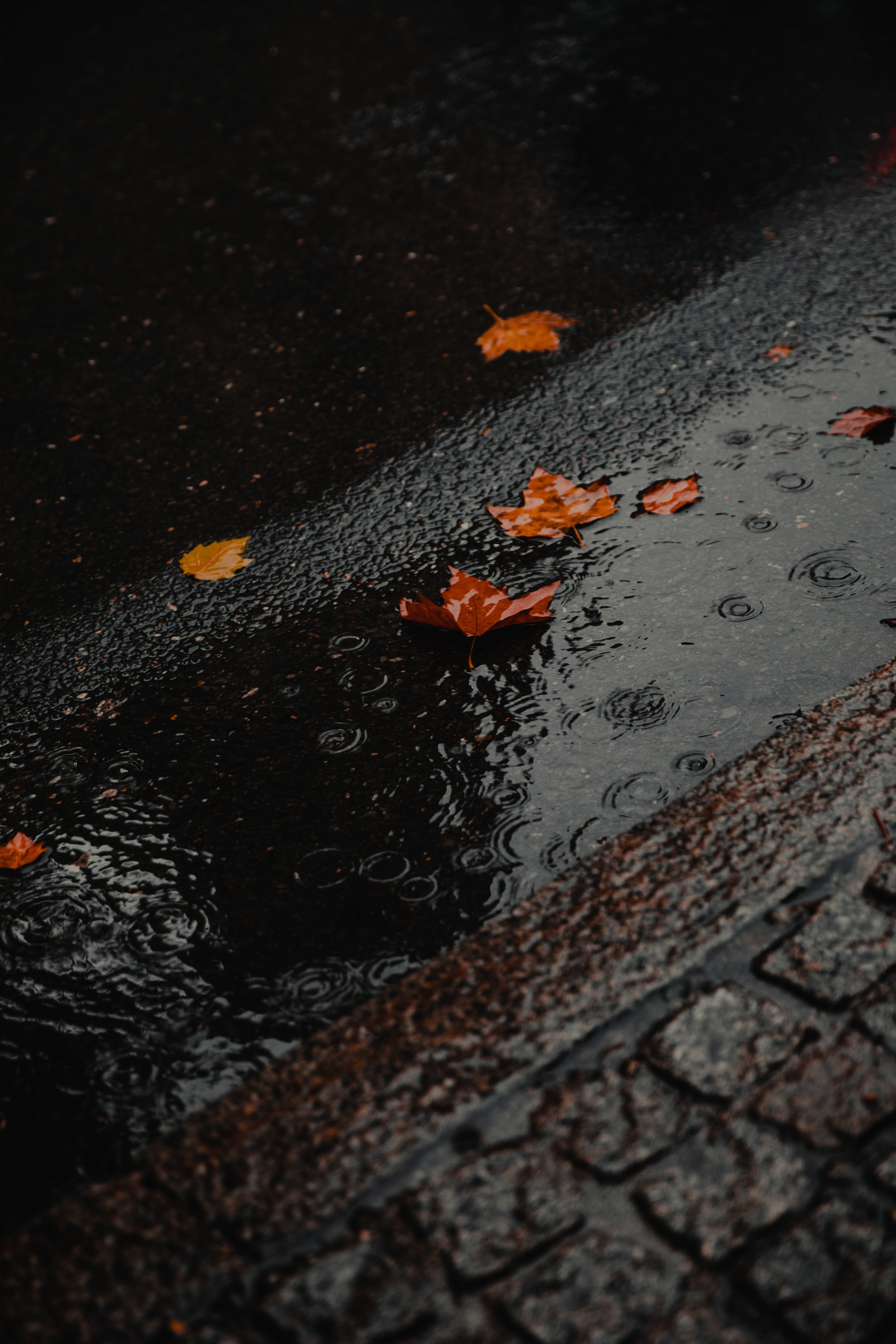 80335 Screensavers and Wallpapers Wet for phone. Download Nature, Rain, Wet, Asphalt, Foliage, Puddle pictures for free