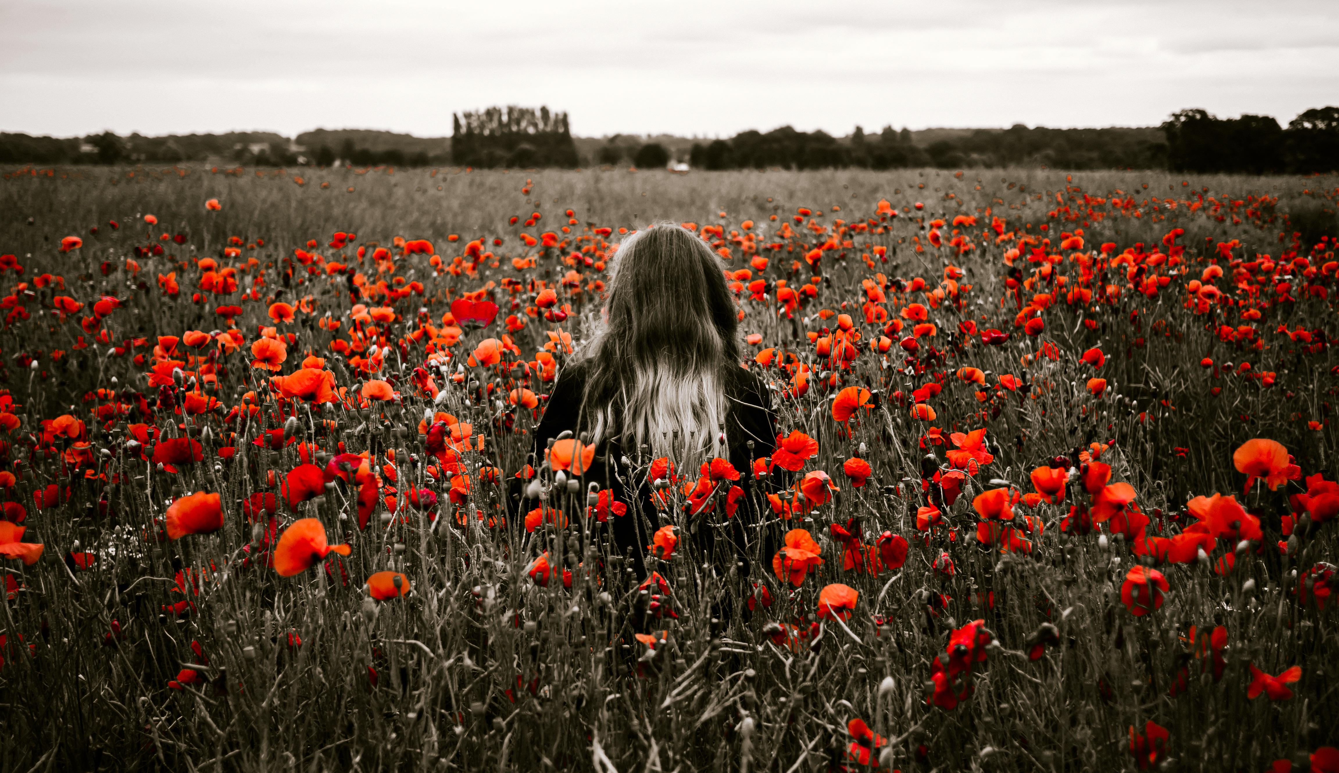 156521 скачать обои Природа, Цветы, Маки, Поле, Девушка - заставки и картинки бесплатно