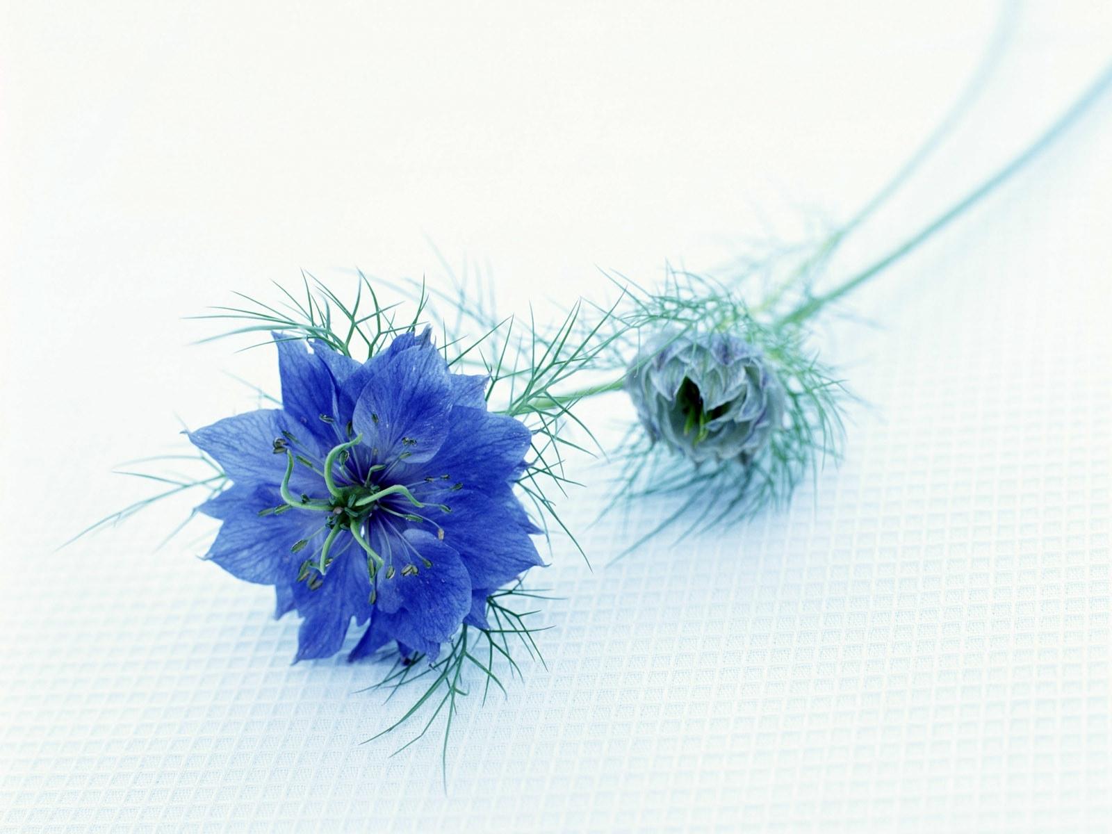 4794 скачать обои Растения, Цветы - заставки и картинки бесплатно
