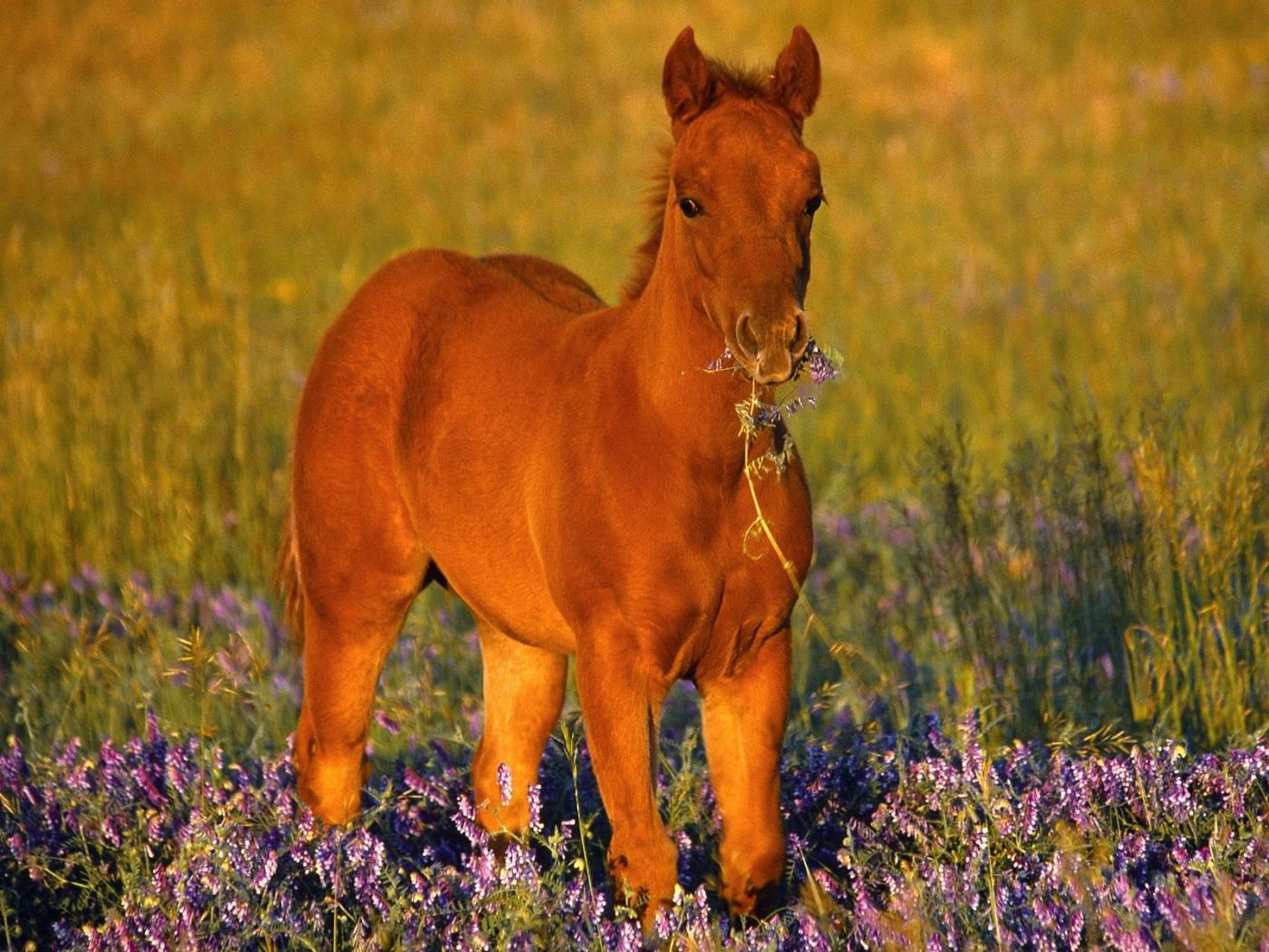 28854 скачать обои Лошади, Животные - заставки и картинки бесплатно