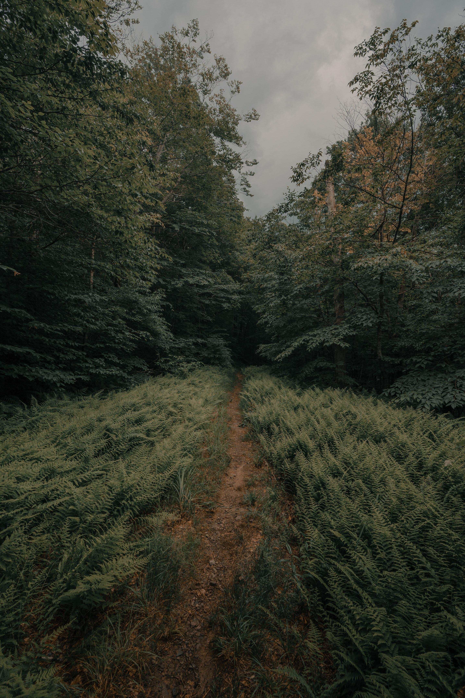 108831 Hintergrundbild herunterladen Natur, Bäume, Farne, Wald, Pfad - Bildschirmschoner und Bilder kostenlos