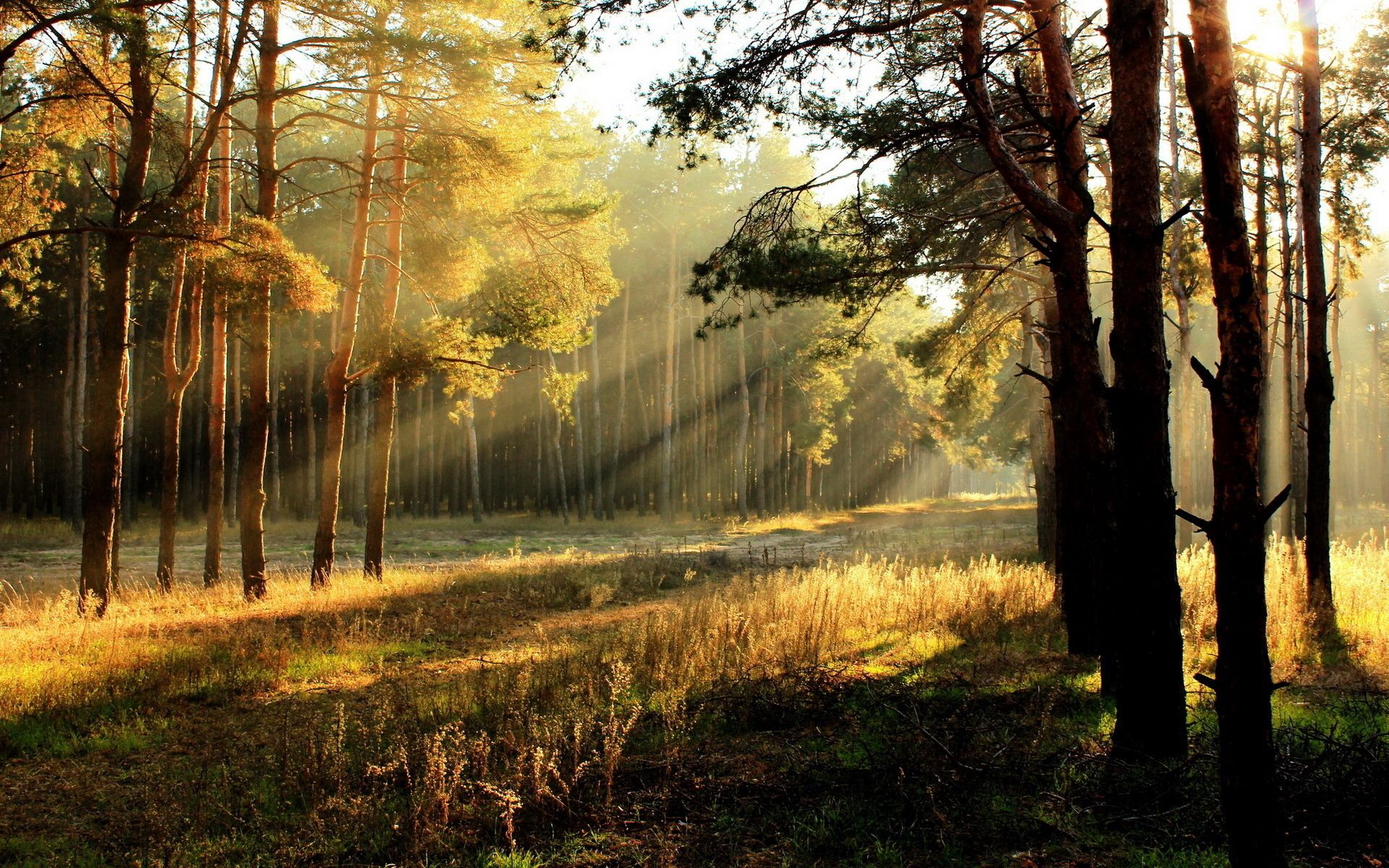 65708 Screensavers and Wallpapers Beams for phone. Download Nature, Trees, Sun, Dawn, Shine, Light, Beams, Rays, Young Growth, Teen, Polyana, Glade, Outskirts, Edge pictures for free