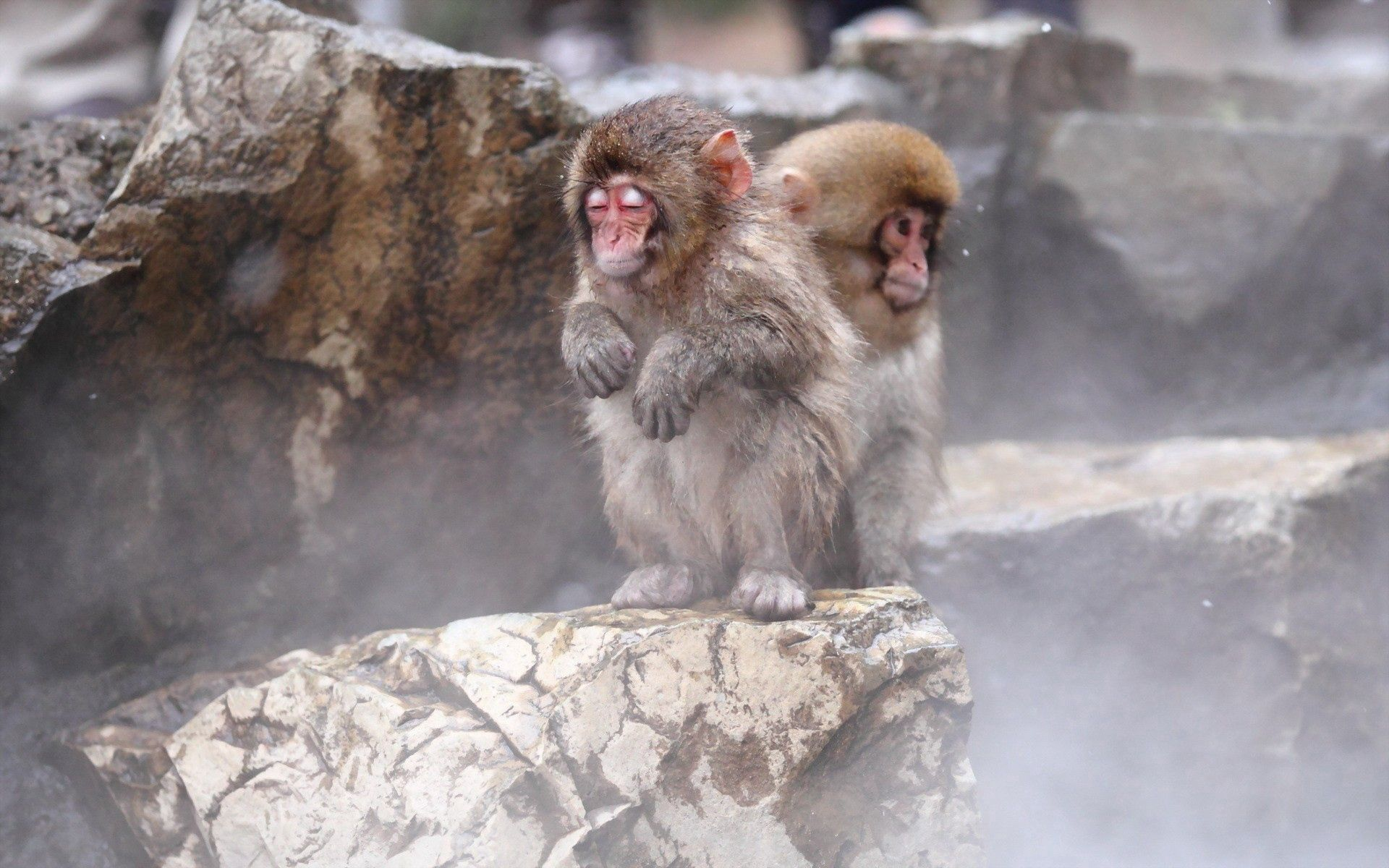 135092 Screensavers and Wallpapers Monkeys for phone. Download Animals, Monkeys, Sit, Toddlers, Kids pictures for free