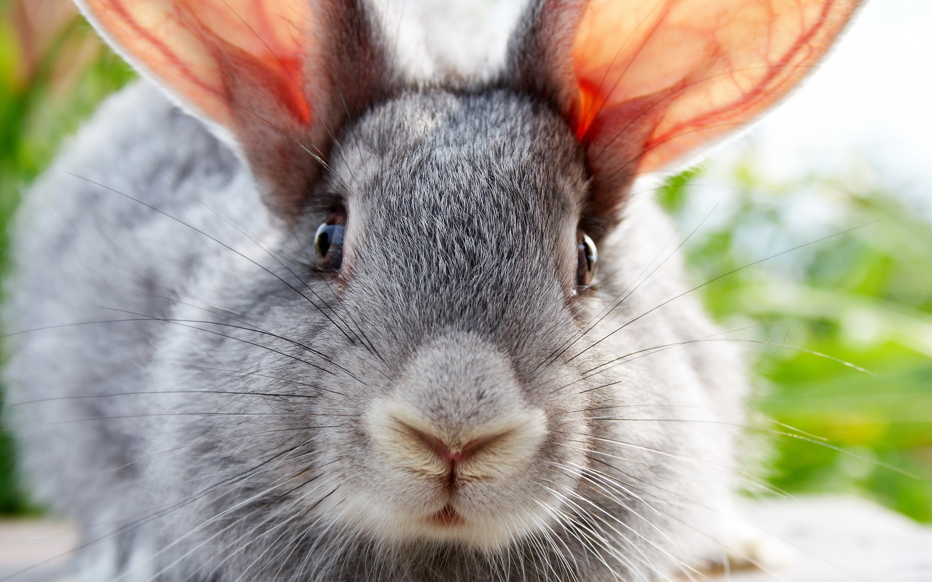 28777 download wallpaper Animals, Rabbits screensavers and pictures for free
