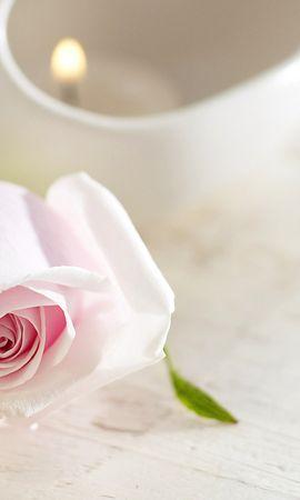 14329 скачать обои Растения, Цветы, Розы - заставки и картинки бесплатно