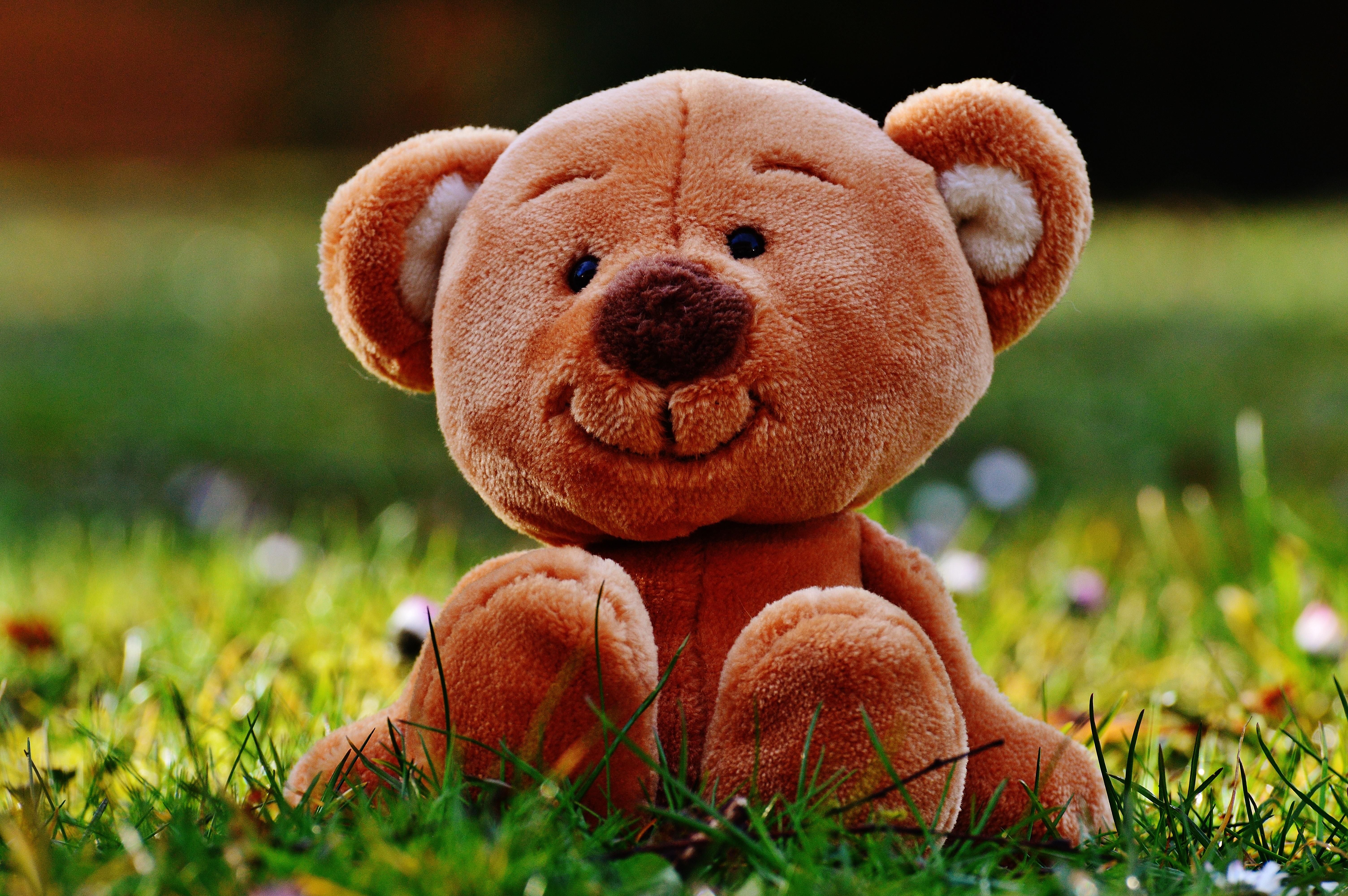 81047 Hintergrundbild herunterladen Grass, Spielzeug, Verschiedenes, Sonstige, Plüschbär, Der Teddybär - Bildschirmschoner und Bilder kostenlos