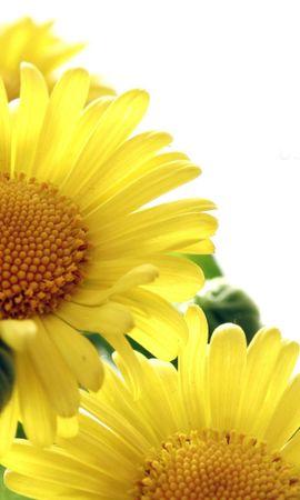 24538 скачать обои Растения, Цветы - заставки и картинки бесплатно
