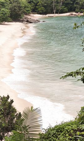 134723 download wallpaper Nature, Beach, Plants, Coast, Exotic, Exotics screensavers and pictures for free