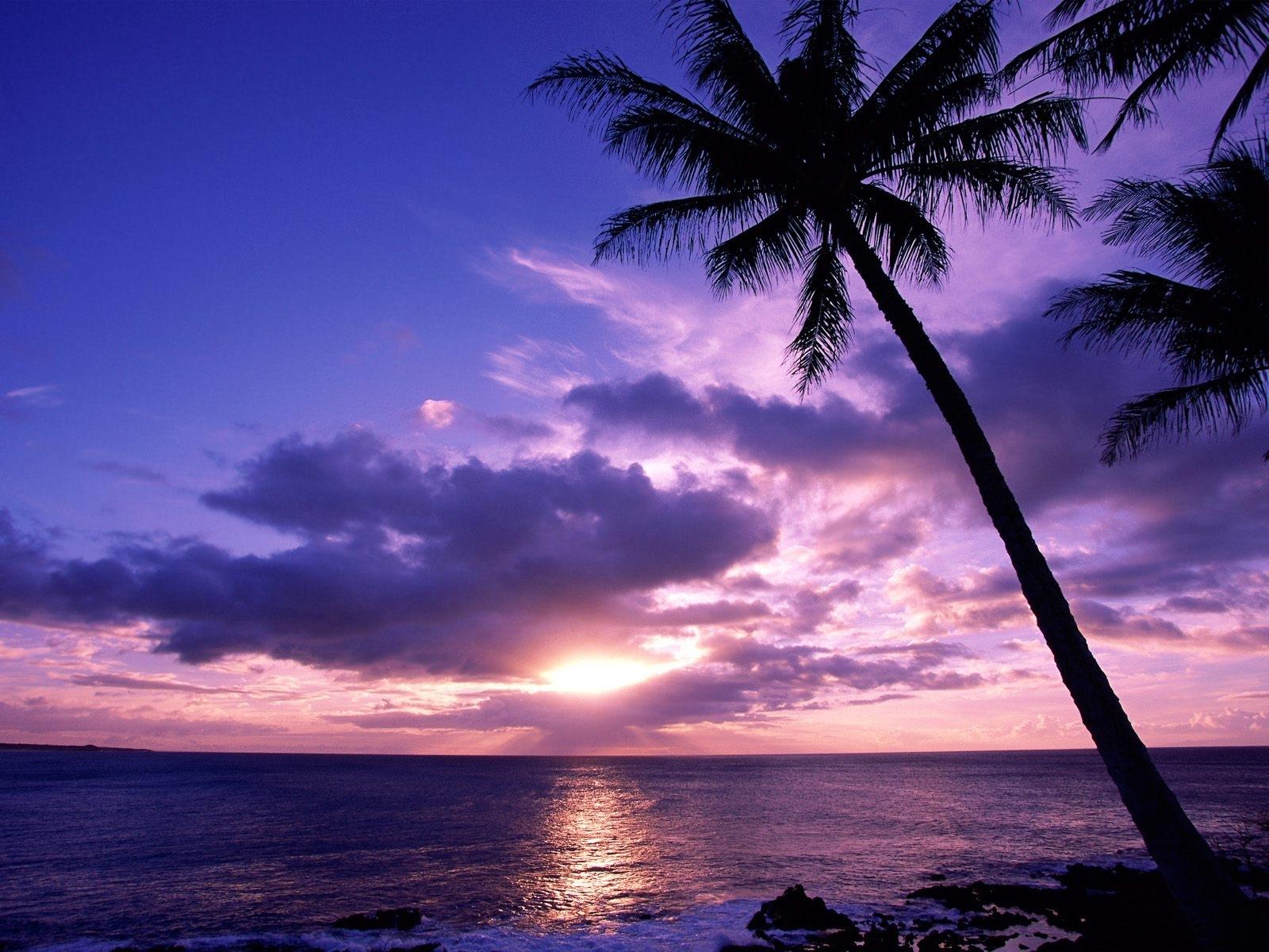 4710 télécharger le fond d'écran Paysage, Palms, Coucher De Soleil, Mer, Sky, Sun - économiseurs d'écran et images gratuitement