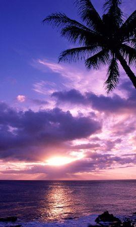 4710 скачать обои Пейзаж, Закат, Небо, Море, Солнце, Пальмы - заставки и картинки бесплатно