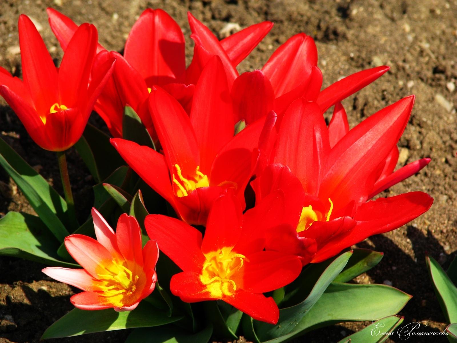 2999 скачать обои Растения, Цветы - заставки и картинки бесплатно