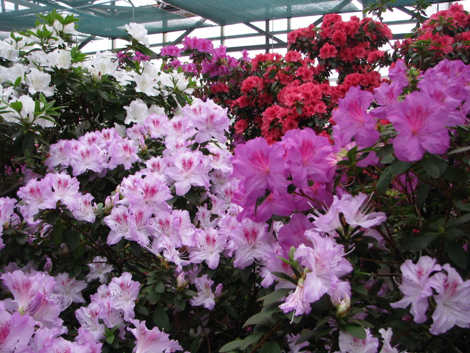 2772 скачать обои Растения, Цветы - заставки и картинки бесплатно