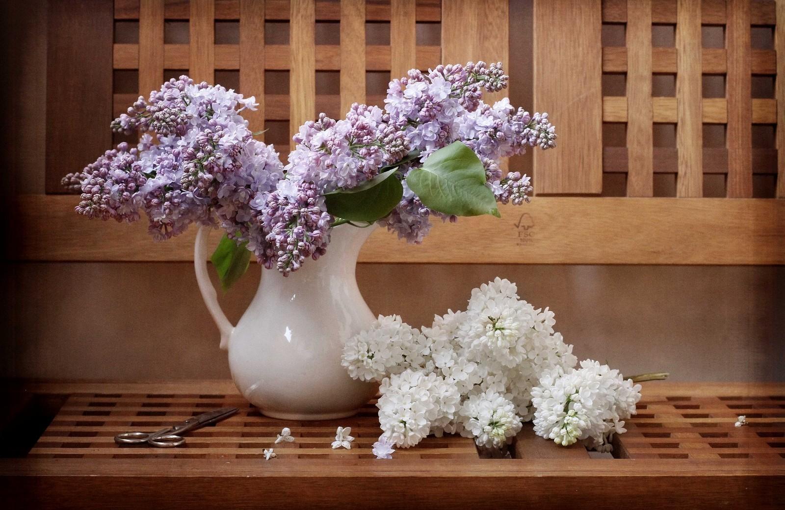 78247 скачать обои Цветы, Сирень, Ветки, Кувшин, Скамейка, Ножницы - заставки и картинки бесплатно