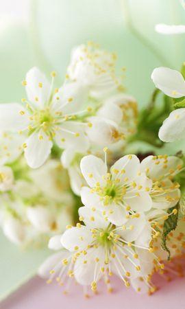 16207 descargar fondo de pantalla Plantas, Flores: protectores de pantalla e imágenes gratis