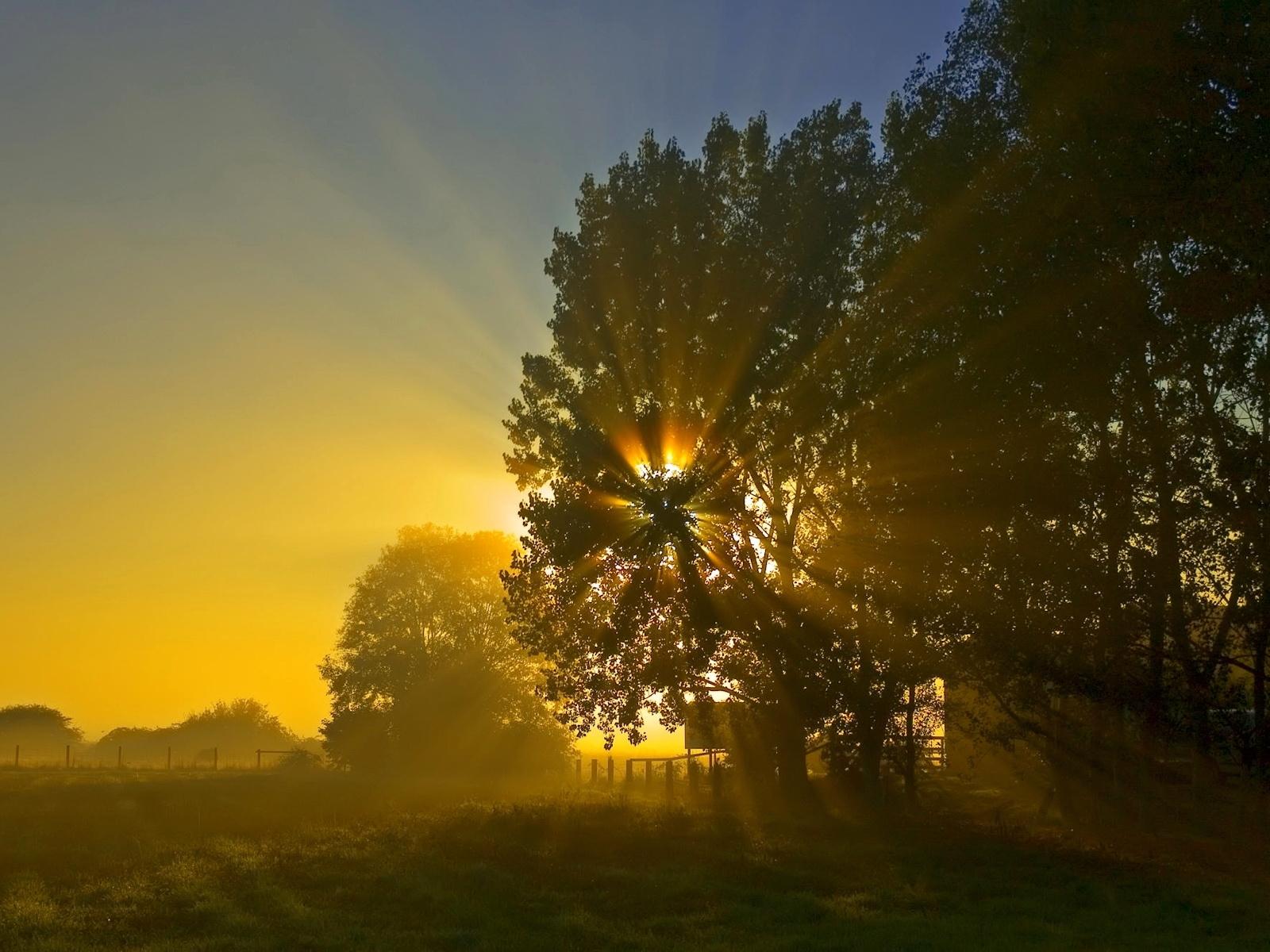 3196 скачать обои Пейзаж, Деревья, Солнце - заставки и картинки бесплатно