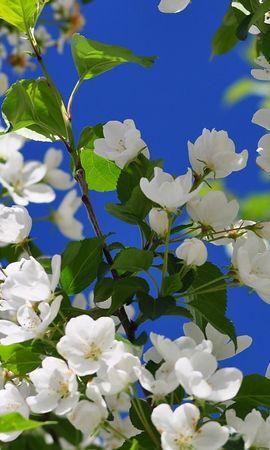 19378 скачать обои Растения, Цветы, Деревья - заставки и картинки бесплатно