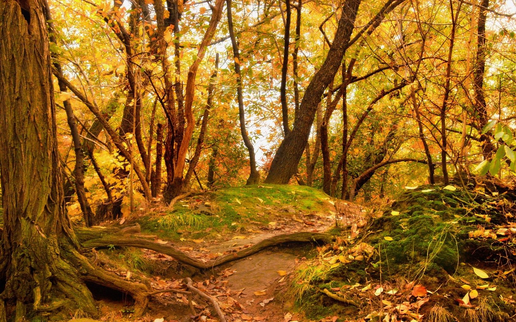 46055 скачать обои Пейзаж, Природа, Деревья - заставки и картинки бесплатно