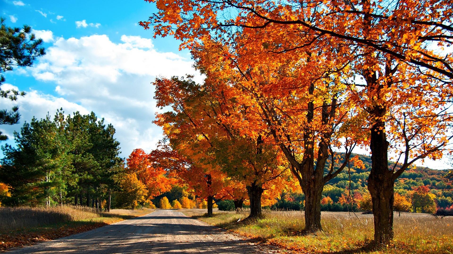 37204 скачать обои Пейзаж, Дороги, Осень - заставки и картинки бесплатно