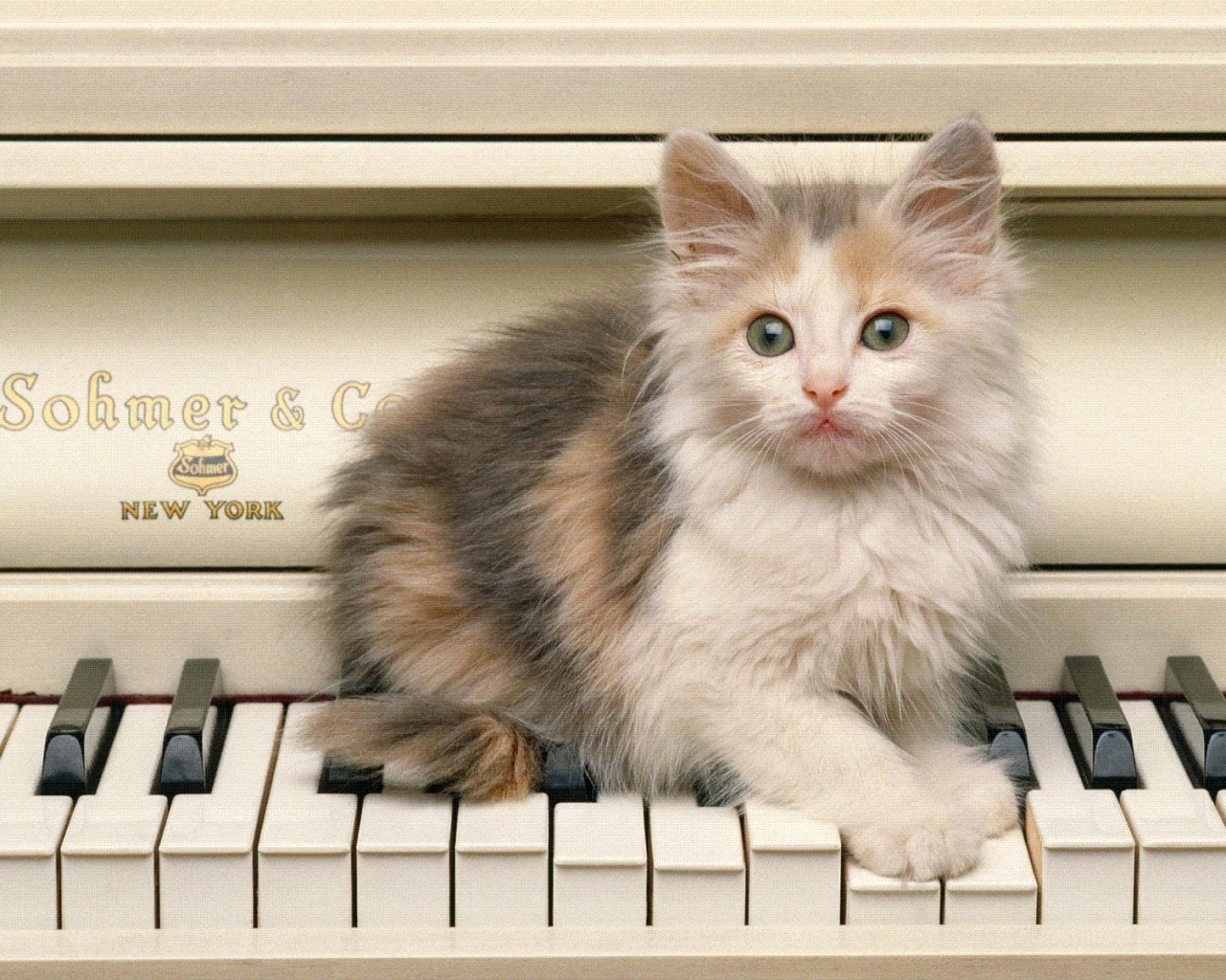 7451 download wallpaper Music, Animals, Cats screensavers and pictures for free