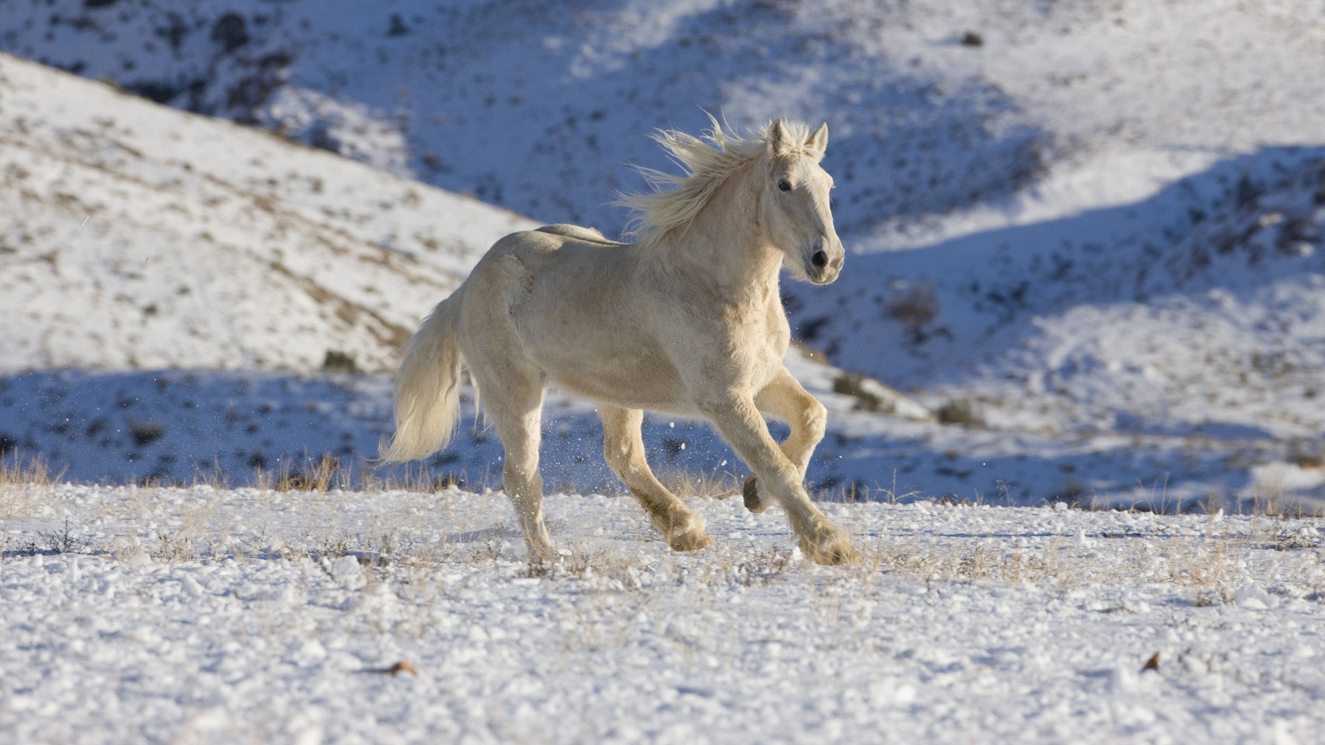 40653 download wallpaper Animals, Horses screensavers and pictures for free