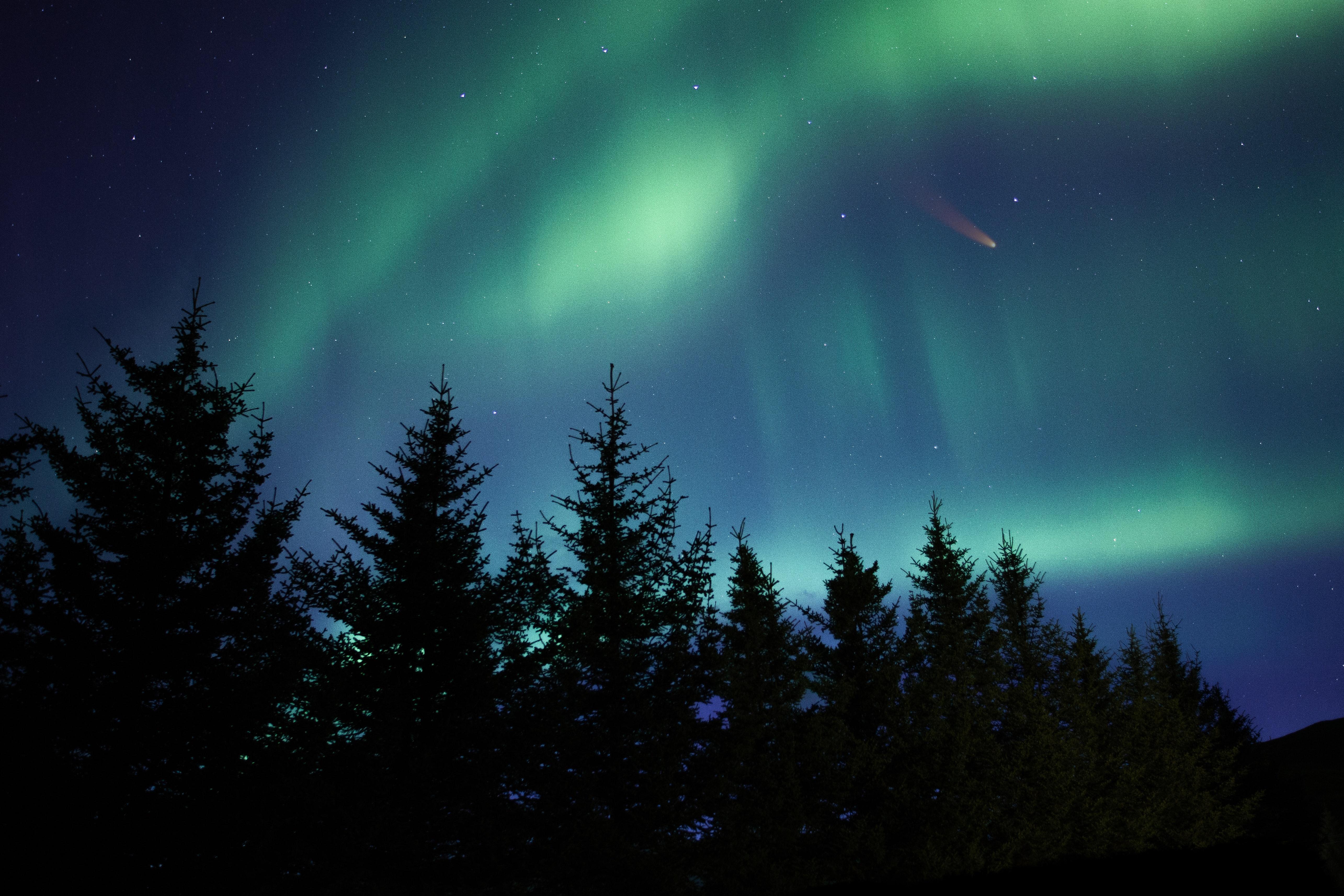 127597 обои 1080x2340 на телефон бесплатно, скачать картинки Природа, Деревья, Ночь, Ель, Северное Сияние 1080x2340 на мобильный
