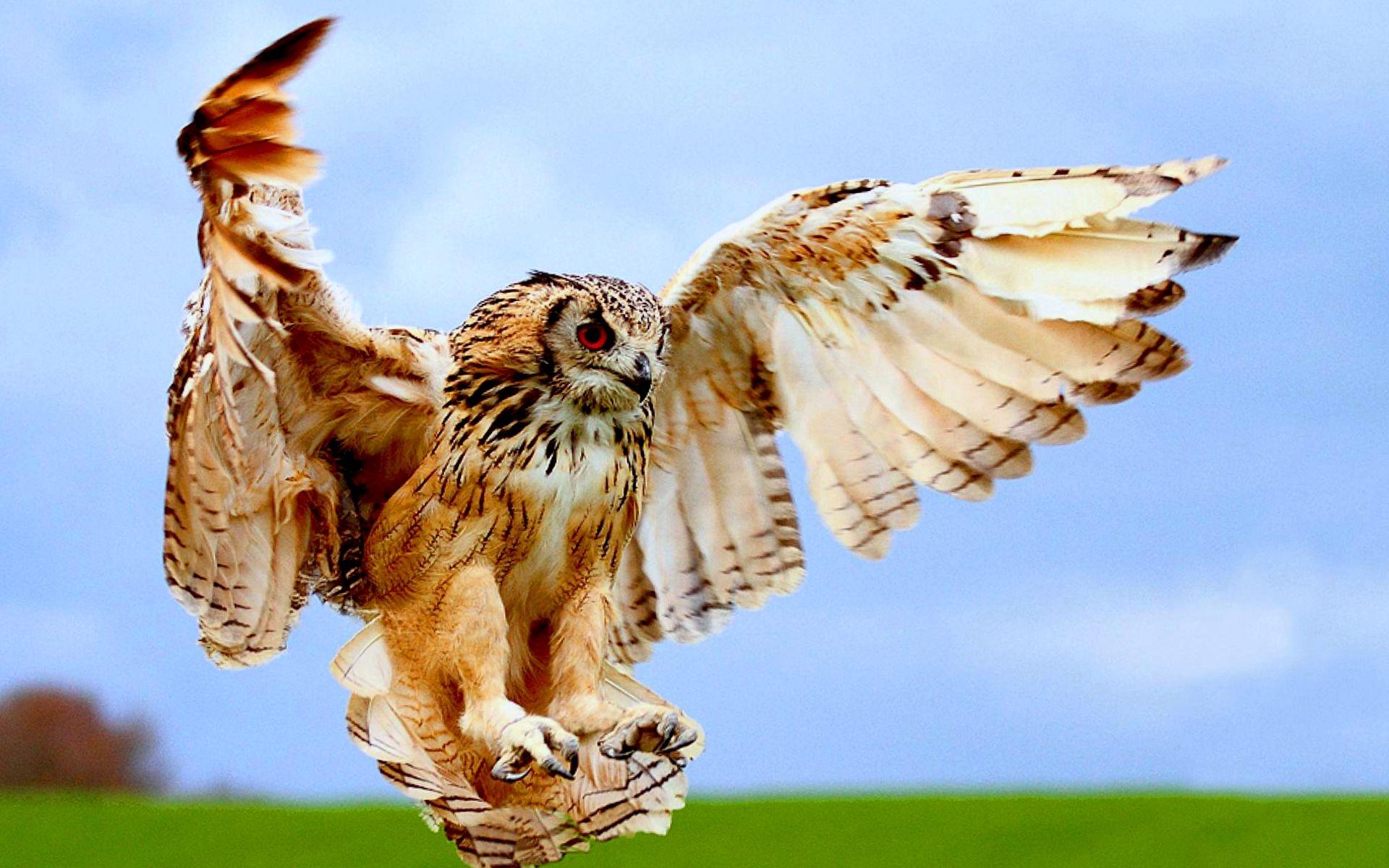 37703 скачать обои Животные, Птицы, Совы - заставки и картинки бесплатно