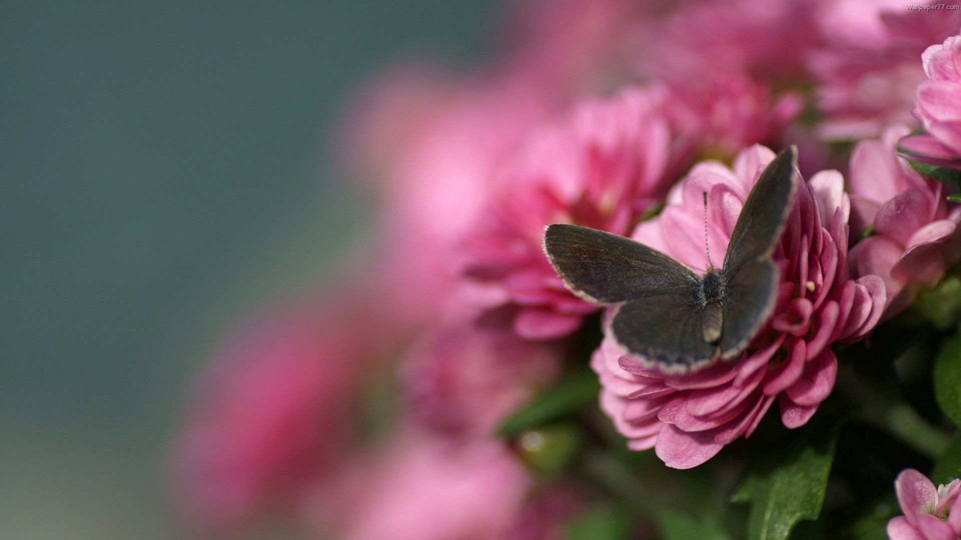 70319 Screensavers and Wallpapers Beautiful for phone. Download Flower, Macro, Beautiful, Flight, Butterfly pictures for free