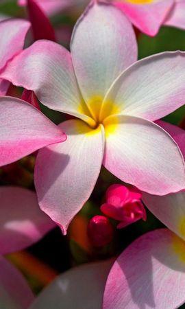 9296 скачать обои Растения, Цветы - заставки и картинки бесплатно
