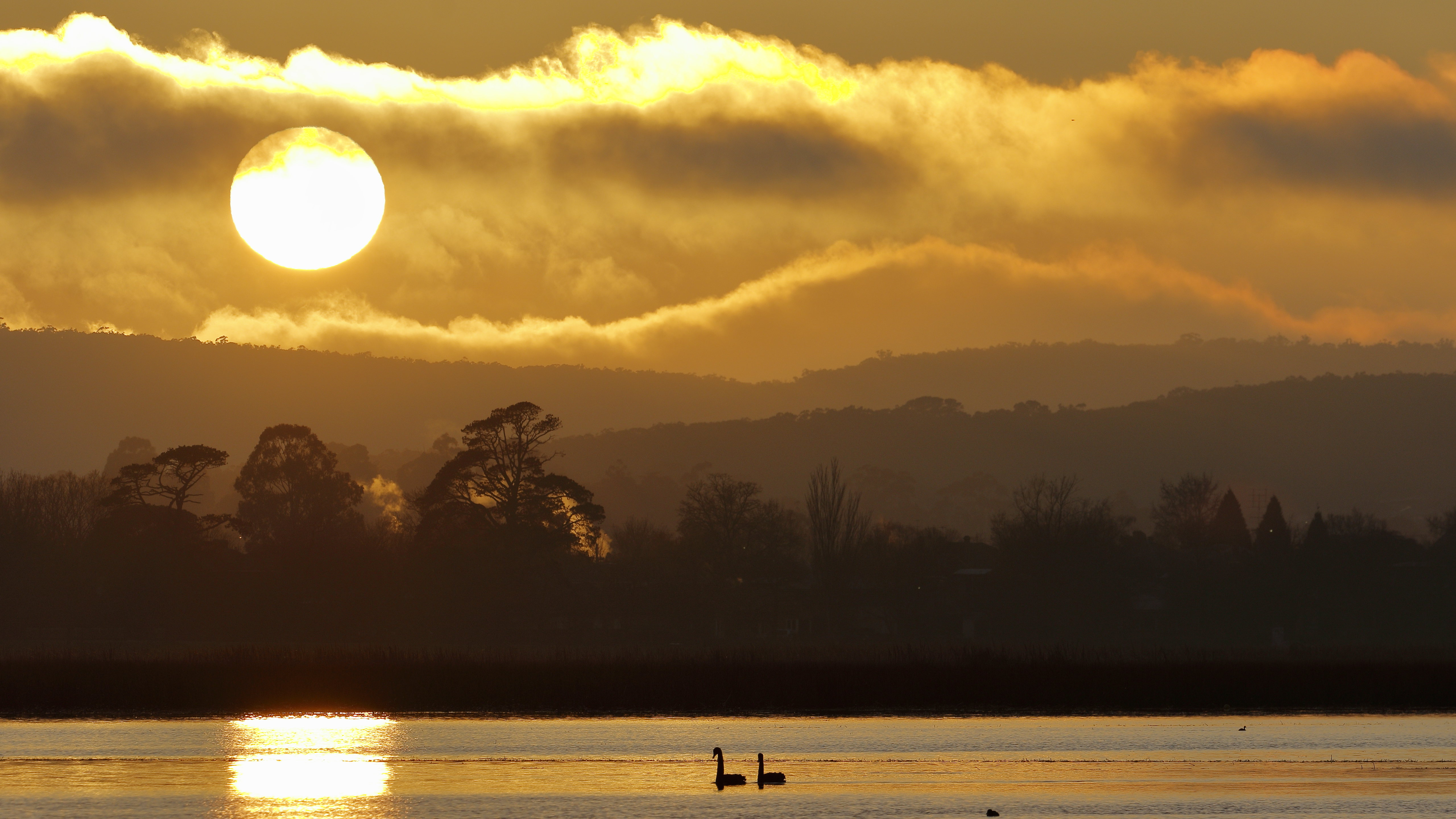 55832 download wallpaper Nature, Swans, Lake, Sunset, Trees, Sky, Birds screensavers and pictures for free