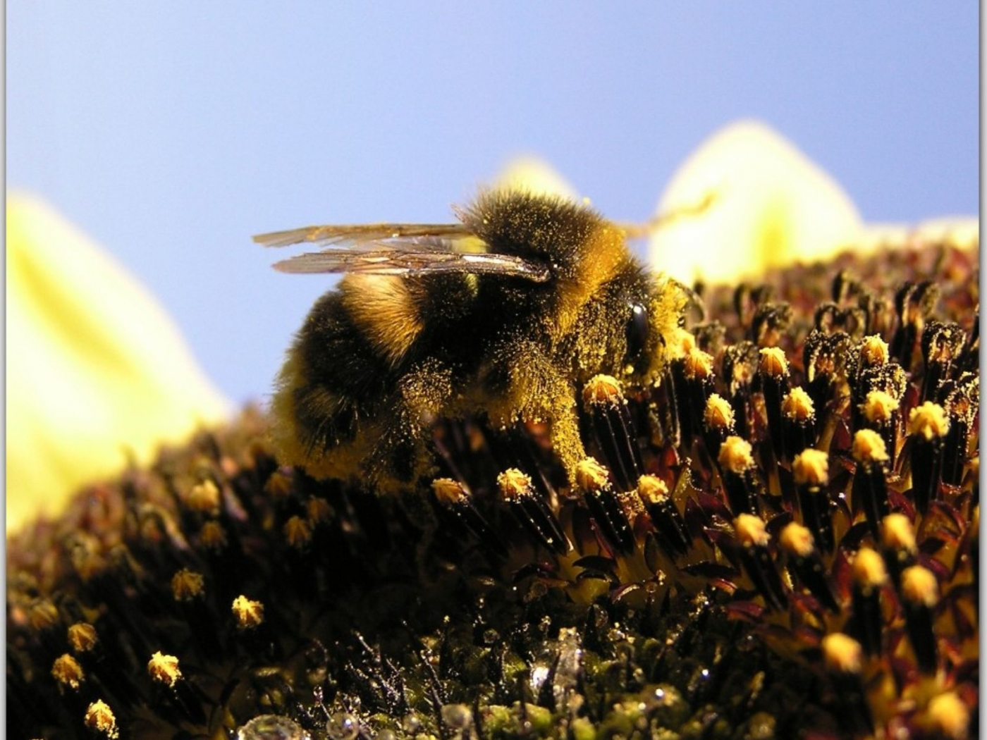 37124 Screensavers and Wallpapers Bees for phone. Download Insects, Bees pictures for free