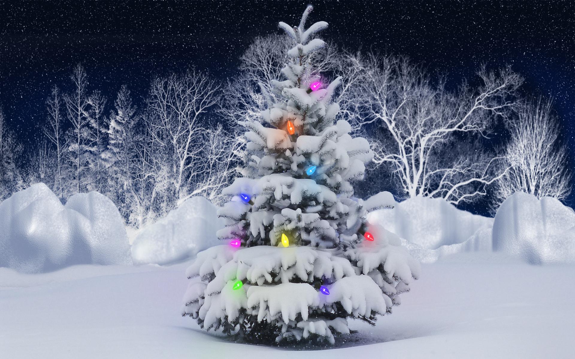 24663 télécharger le fond d'écran Fêtes, Nouvelle Année, Neige, Sapins, Noël - économiseurs d'écran et images gratuitement