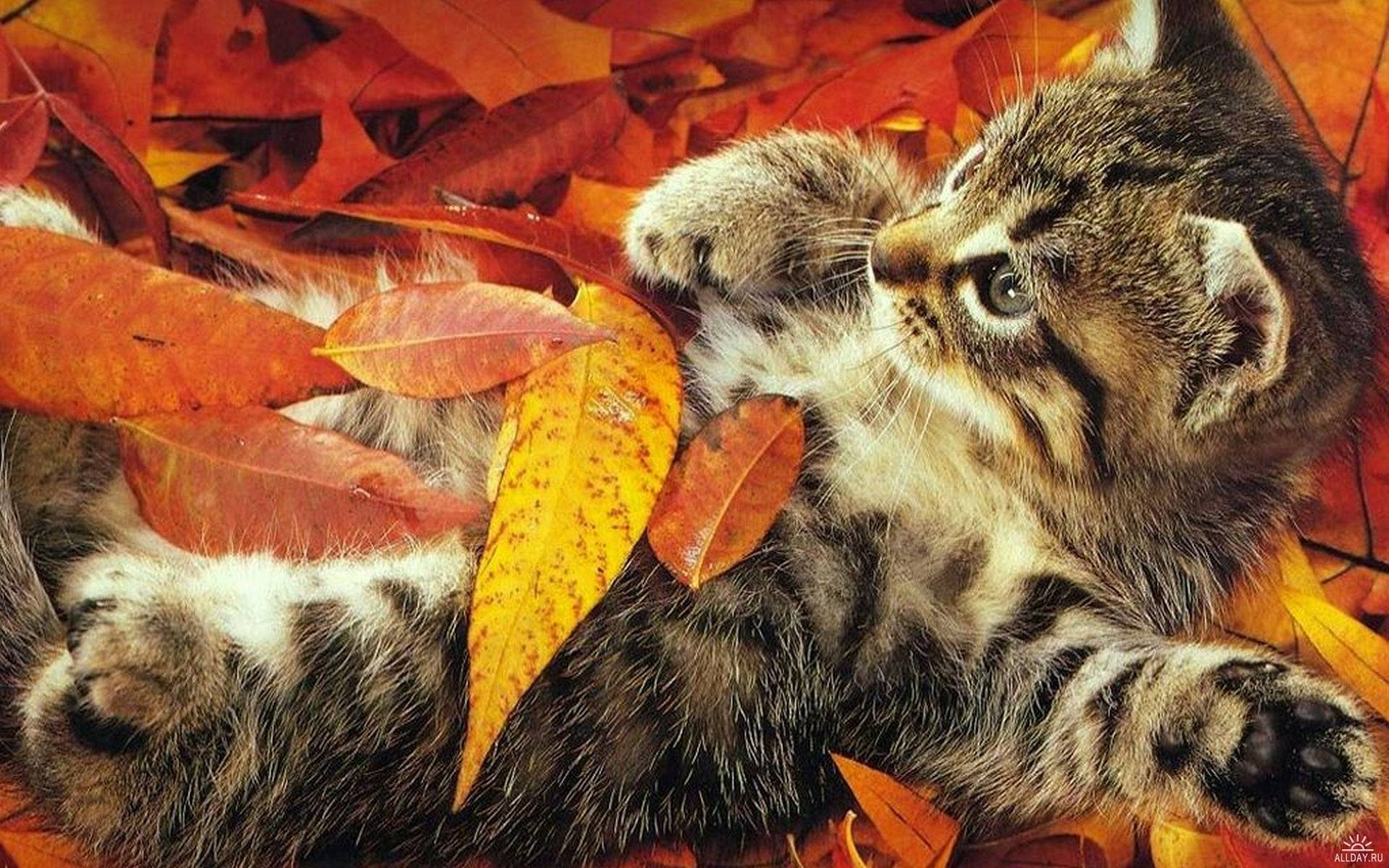 47878 download wallpaper Animals, Cats screensavers and pictures for free