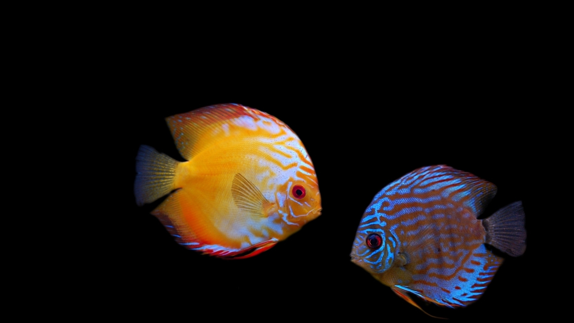 11537 download wallpaper Animals, Fishes screensavers and pictures for free
