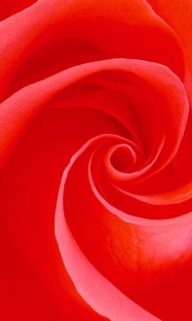 26861 скачать обои Растения, Цветы, Фон, Розы - заставки и картинки бесплатно