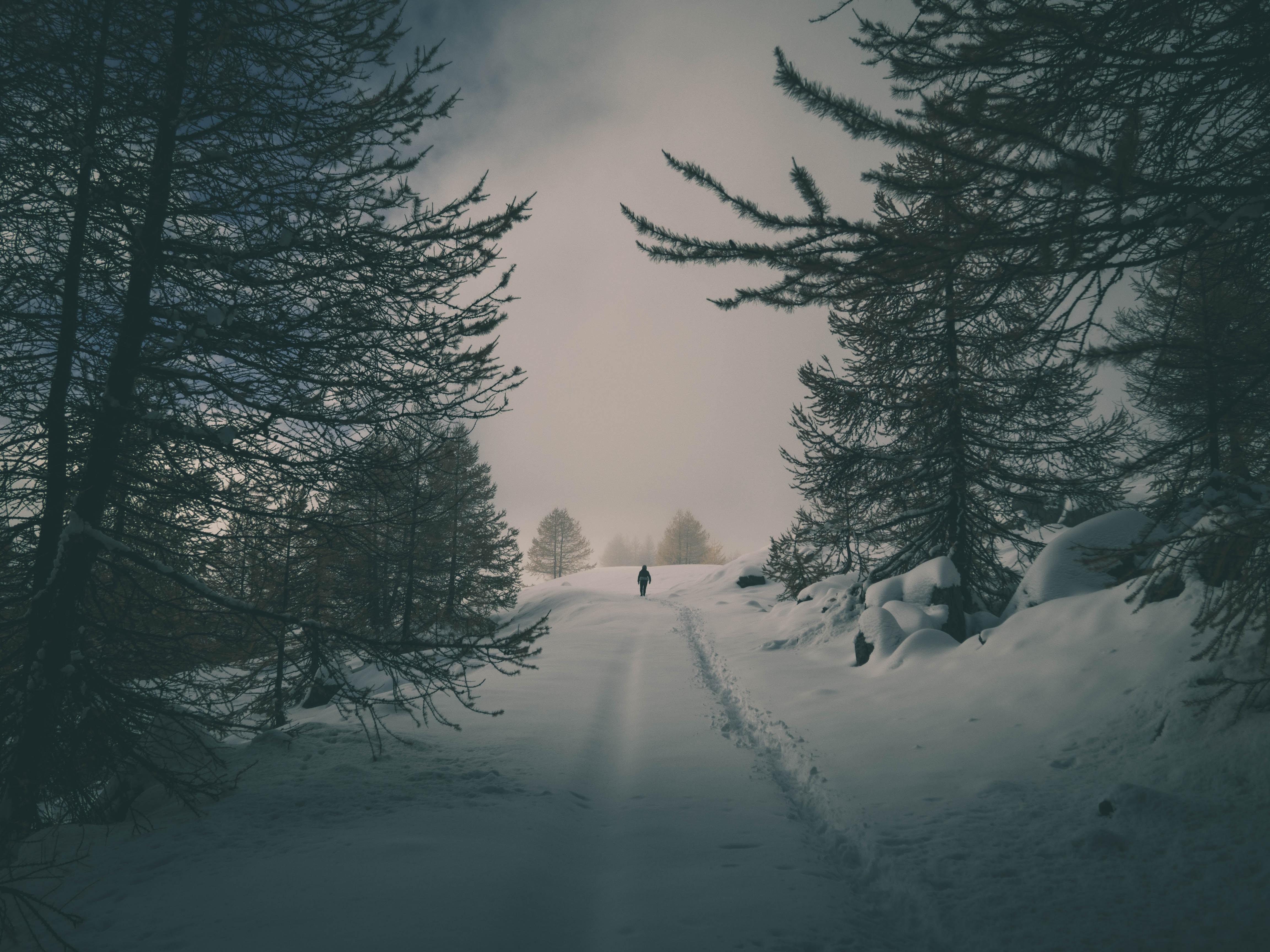 139342 Hintergrundbild herunterladen Winterreifen, Natur, Bäume, Schnee, Silhouette, Wald - Bildschirmschoner und Bilder kostenlos