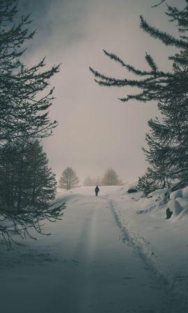 139342 Salvapantallas y fondos de pantalla Nieve en tu teléfono. Descarga imágenes de Naturaleza, Invierno, Nieve, Silueta, Bosque, Árboles gratis