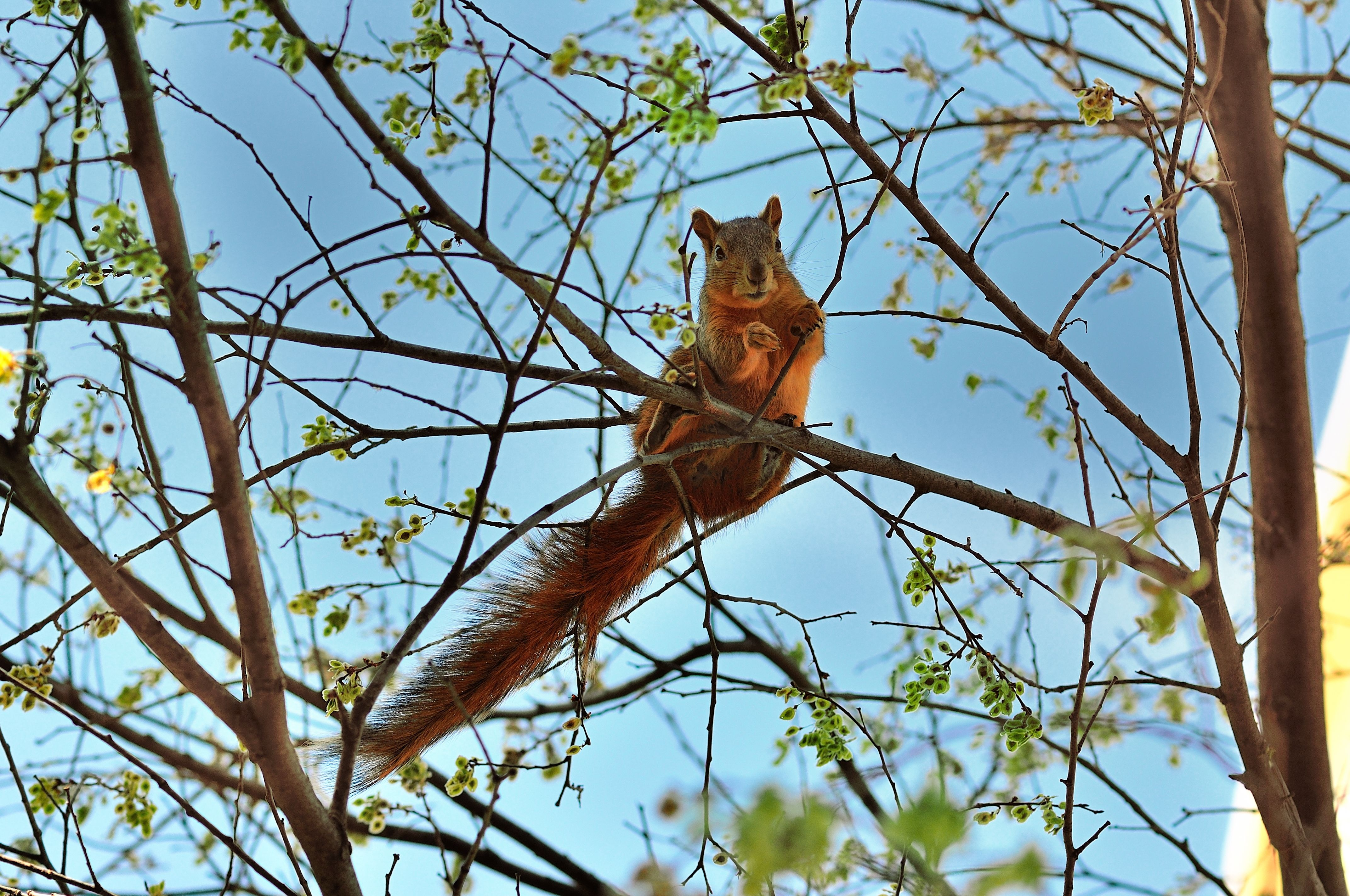 156223 Screensavers and Wallpapers Squirrel for phone. Download Animals, Squirrel, Wood, Tree, Animal, Spring pictures for free