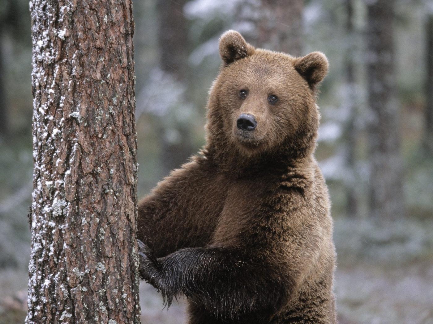47652 Заставки и Обои Медведи на телефон. Скачать Медведи, Животные картинки бесплатно