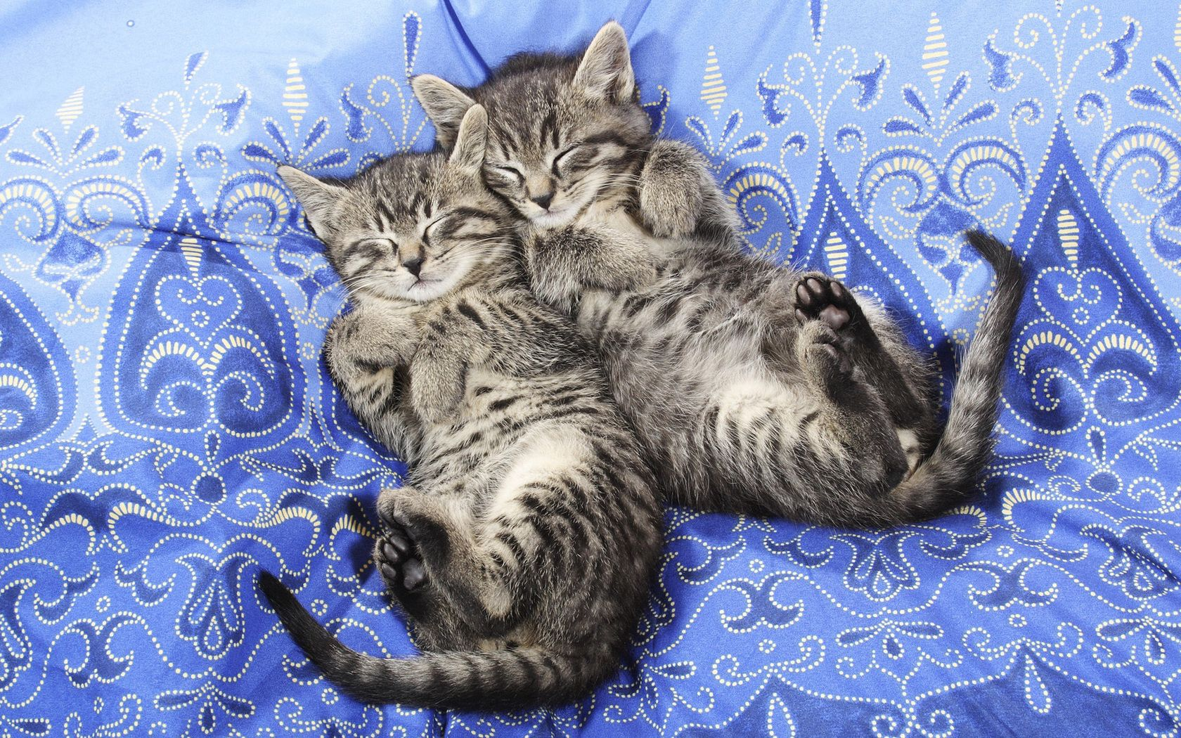 82249 Screensavers and Wallpapers Kittens for phone. Download Animals, Couple, Pair, Sleep, Dream, Material, Kittens, Lace pictures for free